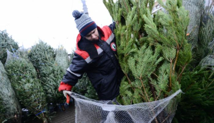 ДЕЦАТА на Донбас с чудесни новогодишни елхи от Карелия