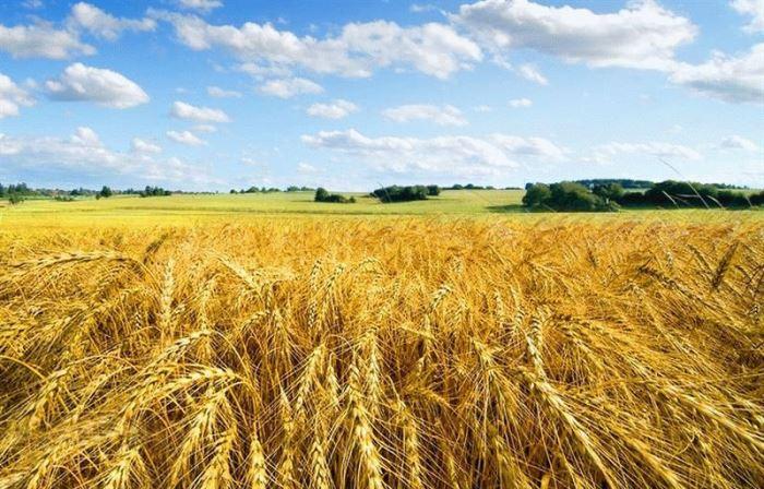 ЗАЩО Русия стана зърнопроизводител № 1 в света