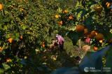 МАСЛО или ОРЪЖИЯ: Русия овладява световния селскостопански пазар