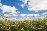 РУСИЯ: Световен лидер не само на пшеница